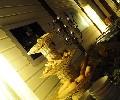 Galerie 8-Frame_Creative_Studio_2240.JPG anzeigen.